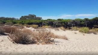 natuur nabij islantilla