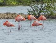 flamingo27s