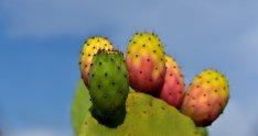 1005 cactus